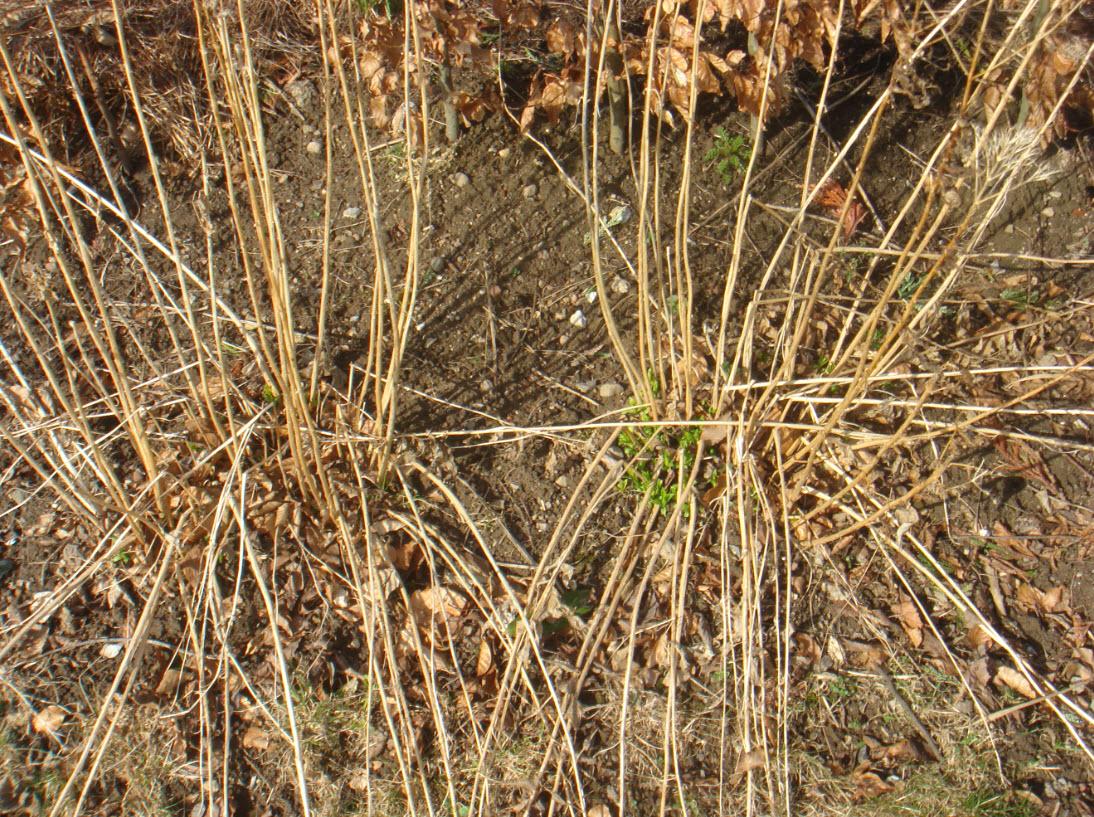 Den visne høstfloks brækkes af