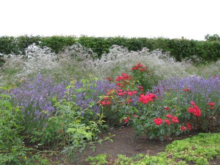 Roser, lavendler og brudeslør