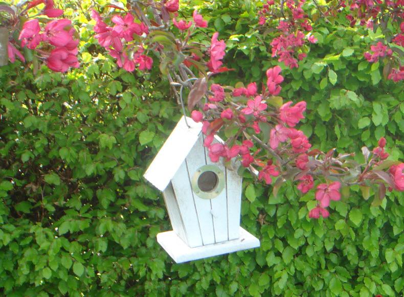 Paradisæble med fuglehus